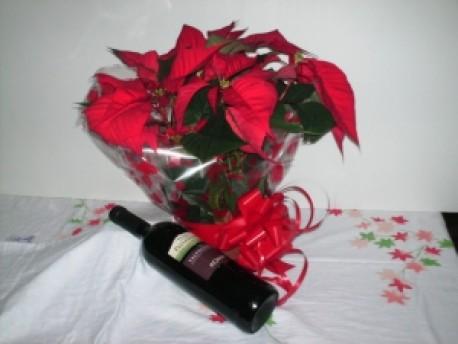 Gift wrapped Poinsettia & Wine
