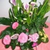 Plant arrangements
